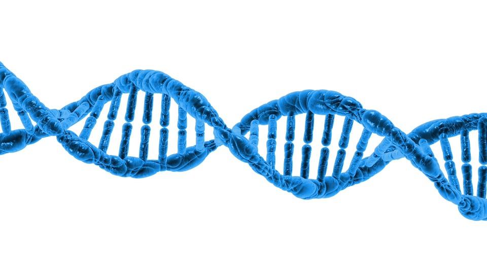 Telómeros: la verdadera causa del envejecimiento y cómo prevenirlo